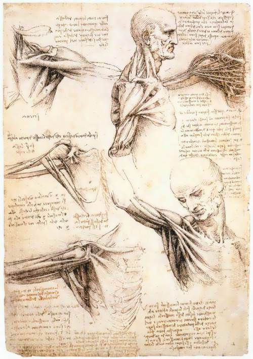 Anatomical drawings of the shoulder girdle