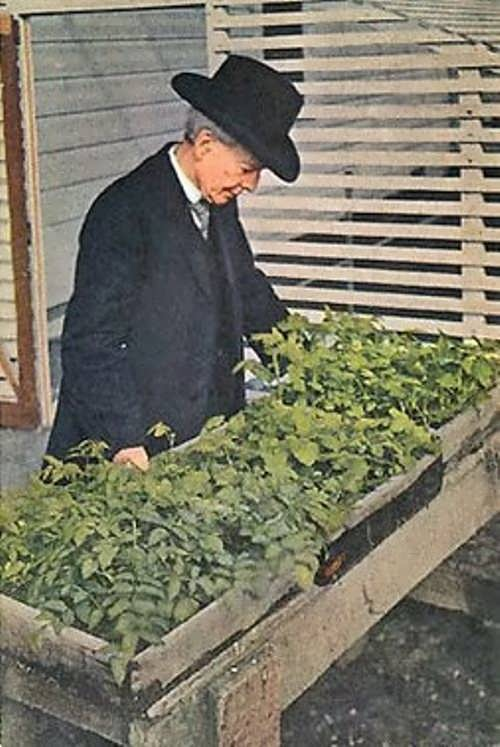 American plant breeder Luther Burbank