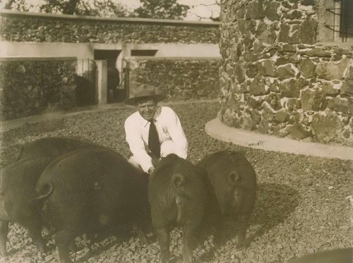 Jack London is feeding pigs
