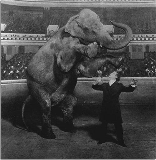 Houdini - master illusionist