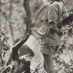 Jane Goodall watches chimpanzees in Kenya