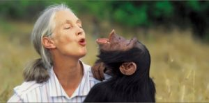 Goodall - primatologist and ethnologist
