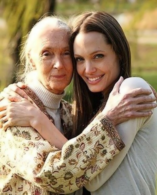 Goodall and Angelina Jolie
