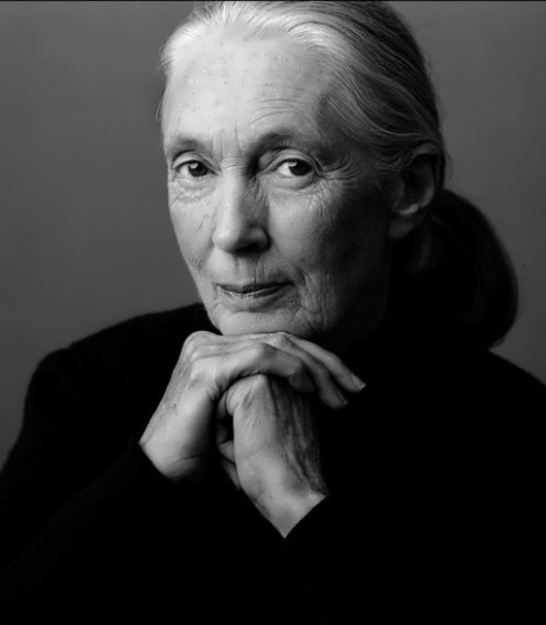 Jane Goodall - woman who lived with chimpanzees