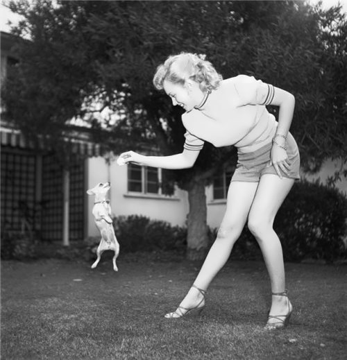Monroe and a little dog in 1950