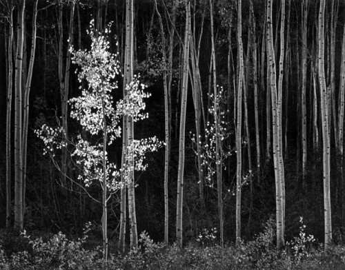 Aspens, 1958