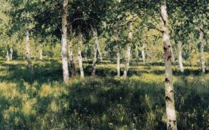 Birch Grove, 1885