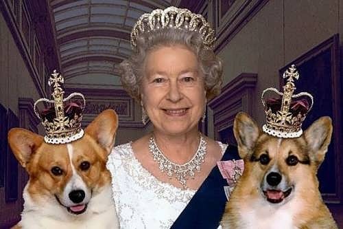 Elizabeth II and her dogs