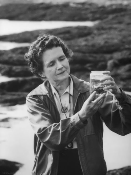 Alfred Eisenstaedt. Rachel Carson standing seaside examining specimen in jar