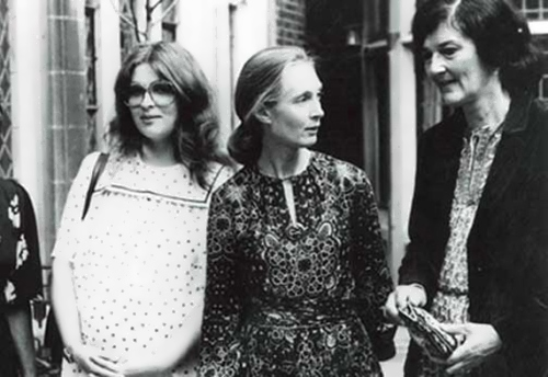 From left to right, Birute Galdikas, Jane Goodall, and Dian Fossey