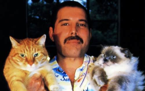 Mercury and his favourite cats