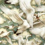 Wild Swans. Ann Yvonne Gilbert